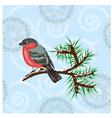 vector bullfinch vector image