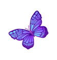 beautiful purple butterfly with blue pattern on vector image