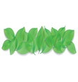 green leaves close-up on white background vector image vector image