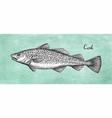 ink sketch cod fish vector image vector image