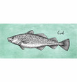 ink sketch of cod fish vector image vector image