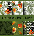 set seamless patterns with tropical leaves and vector image