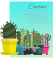 home cactus garden poster cartoon vector image vector image