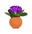 viola house plant in flower pot vector image vector image