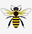 detailed honey bee vector image