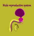 human organ icon in flat style male reproductive vector image vector image
