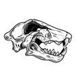 skull tiger in vintage monochrome style design vector image