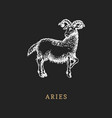 aries zodiac symbol hand drawn in engraving style vector image