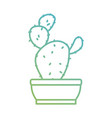 cactus plant draw vector image vector image