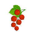 red currant brunch isolated on vector image vector image
