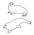 pretty seals isolated on white set of vector image vector image
