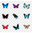 realistic papilio ulysses purple monarch common vector image vector image