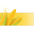 corn cob organic food vector image