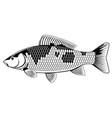 koi carp fish black and white vector image