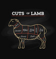 lamb butcher chalkboard scheme vector image vector image