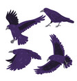 set crows isolated on white background vector image vector image