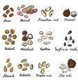 set of drawing nuts vector image vector image