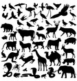 animals image animals vector image vector image