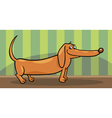 dachshund dog cartoon vector image vector image