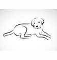 Dog labrador on white background pet animal