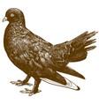 engraving black pigeon bird vector image