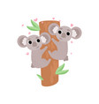 two cute baby koala bears climbing tree lovely vector image vector image