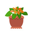 pseuderanthemum room plant vector image vector image