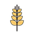 spike wheat isolated icon vector image