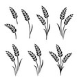 black abstract wheat ears hand drawn set vector image vector image