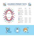 childrens primary teeth schedule of baby teeth vector image vector image