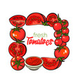 square frame of tomatoes salsa ketchup bowl vector image vector image