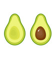 avocado fruit icon on white vector image