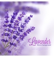 Lavender Flower Background vector image vector image