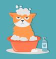 portrait cat animal bathe pet cute kitten purebred