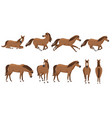 set brown horse wild or domestic animal cartoon vector image vector image