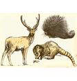 Echidna Deer and Procyonidae Raccoon vector image