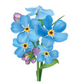 bunch blue forget me not flowers vector image vector image
