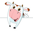 cute cow peeking out from behind a white surface vector image