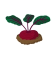 Red radishes cartoon icon vector image vector image