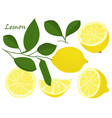 set of yellow whole and chopped lemon isolated on vector image vector image