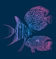 graphic aquarium fishes set vector image vector image