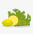 healthy fruits and vegetables vector image vector image