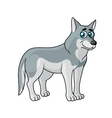 Cartoon grey wolf vector image
