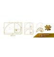 golden ratio for creative design vector image vector image