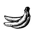 hand drawn black color sketch of banana on vector image vector image
