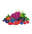 ripe berries banner vector image