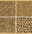 set leopard skin seamless pattern wild cat vector image vector image