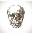 skull-sketch vector image