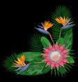 tropical bouquet cornercomposition vector image vector image