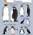 collection different species penguins vector image vector image